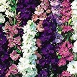 Juju's Garden Rocket Larkspur Mix Seeds-100+ Seeds