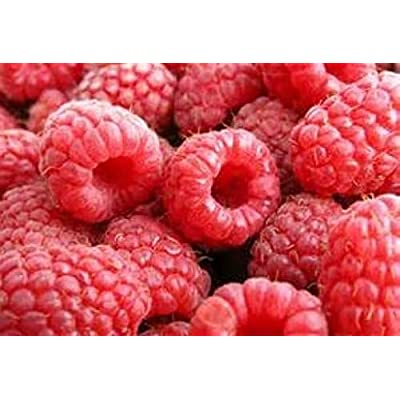 Portal Cool 20 Red Raspberry Seeds Free USA Shipping : Garden & Outdoor
