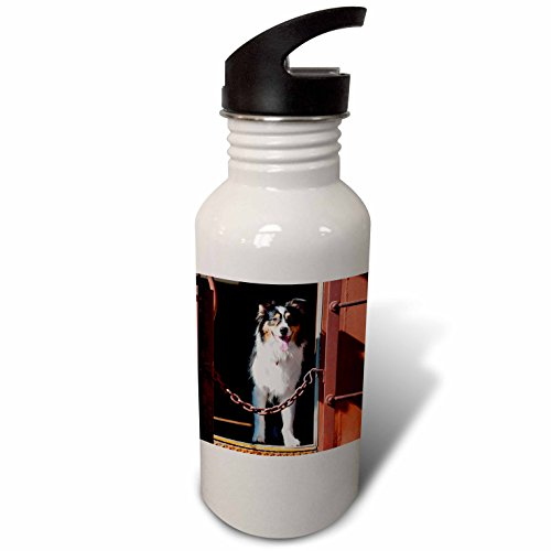 3drose-danita-delimont-dogs-australian-shepherd-in-a-train-car-flip-straw-21oz-water-bottle-wb-23032