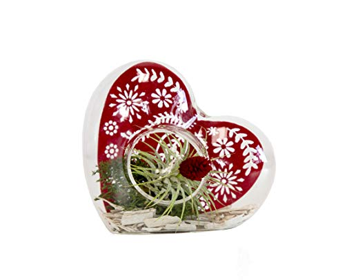 Live Air Plants, Tillandsia In 5 Inch Glass Heart, From Hallmark Flowers