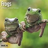 Frogs Wall Calendar 2020