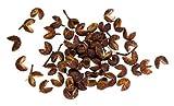 25 Seeds Szechuan Pepper Peppercorn Sichuan Szechwan Zanthoxylum Simulans Spice Seeds