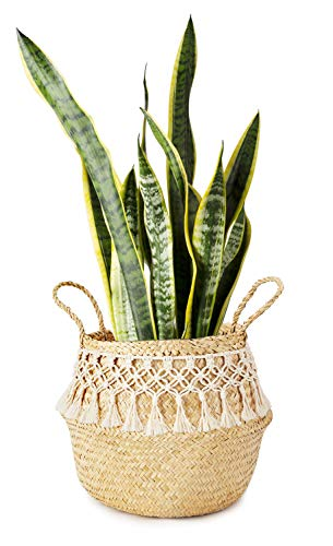 Mkono Seagrass Plant Basket Indoor Planter Decorative Flower Pot Cover Up to 10 Inch Pot with Macrame Wrap, M