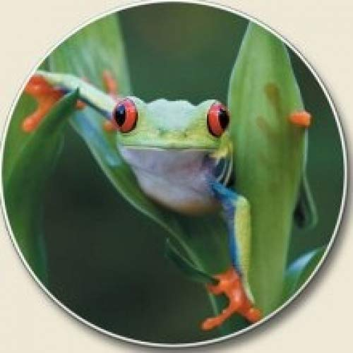 - Frog Auto Coaster, Single Coaster for Your Car