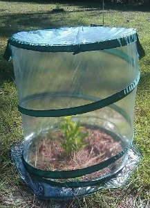 I10direct Jumbo Popup Greenhouse Protects Shrubs Small