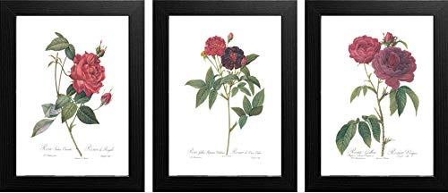 (Ink Inc. Set of 3 Botanical Rose Prints, Red Home Decor, Redoute Roses, Unframed Wall Art 8x10 Matte)
