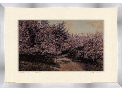 Poster Palooza Framed Disappearing Blossom- 24x18 Inches - Art Print (Stainless Steel Frame)