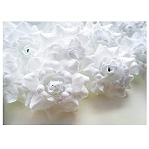 (50) Silk White Roses Flower Head – 1.75″ – Artificial Flowers Heads Fabric Floral Supplies Wholesale Lot for Wedding Flowers Accessories Make Bridal Hair Clips Headbands Dress
