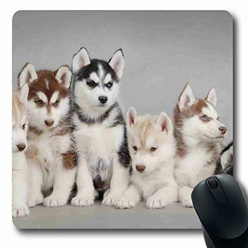 - Ahawoso Mousepads Siberian Husky Puppies Oblong Shape 7.9 x 9.5 Inches Oblong Gaming Mouse Pad Non-Slip Rubber Mat