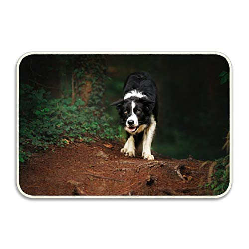 (Starfactr Soft Non-Slip Animal Border Collie Dogs Bath Mat Coral Fleece Area Rug Door Mat Entrance Rug Floor Mats 18