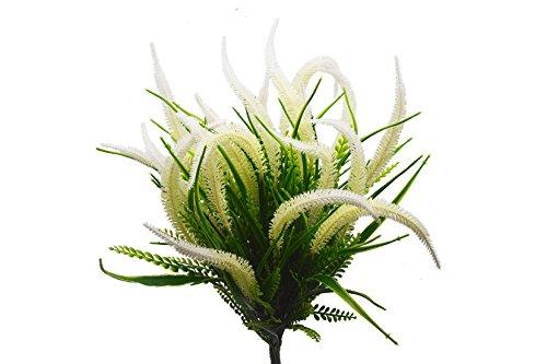 indoor bush plants - 3