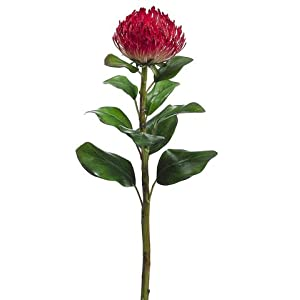 "28"" Needle Protea Spray Red (pack of 12) 100"