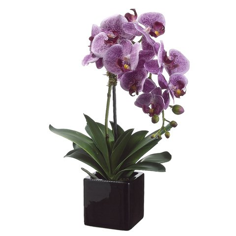 20'' Phalaenopsis Orchid Plant x1 in Ceramic Pot Two Tone Violet (Pack of 4) by Silk Decor