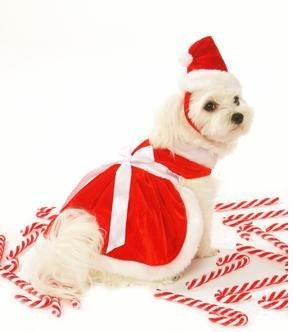 dog dress mrs claus santa girl dog christmas dress w matching hat