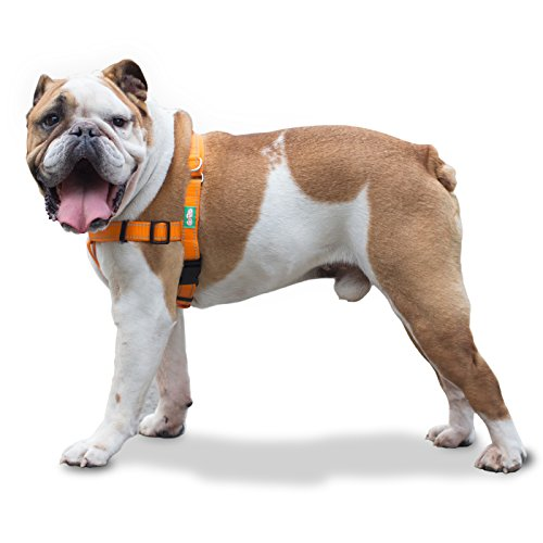 Professional Quality No Pull Dog Harness by GoPets in Safety Orange w Reflective Stitching, Includes Waste Bag Attachment, for Medium Large XL Dogs (Large) - Bulldog Attachment