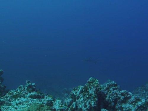 Hammerhead Islands