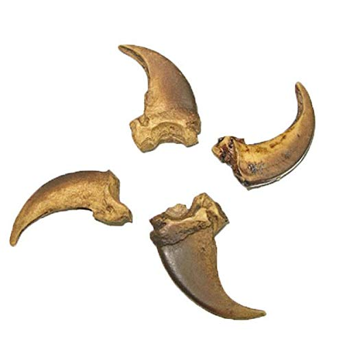 Craft Cast Resin Replica Wolf Claw 1-3/16