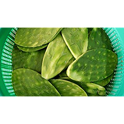 5 Spineless Fresh Edible Cactus Nopales Paddles Cutting : Garden & Outdoor