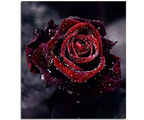 Mobicus 5D DIY Diamond Painting by Number Kits,Rose(12X12inch/30X30CM)