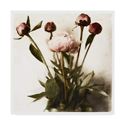 Trademark Fine Art Floral Peonies White Soft by Michael Harrison, 18x18-Inch