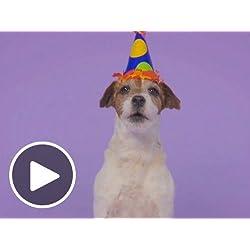 Birthday Animated EGift Cards Woofy