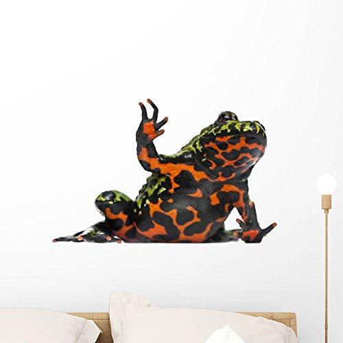 Wallmonkeys FOT-25705169-24 WM302224 Oriental Fire-Bellied Toad Waving Bombina Orientalis Peel and Stick Wall Decals (24 in W x 17 in H), Medium