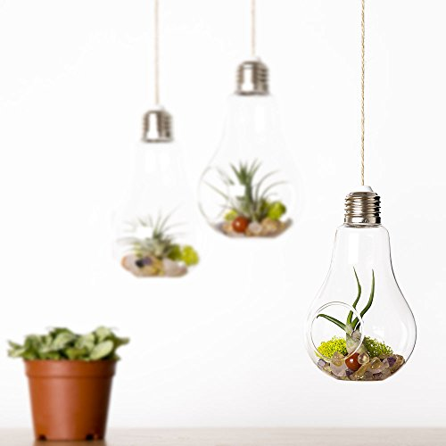 Mkono 3 Pack Light Bulb Terrariums With Strings Hanging Glass Vase