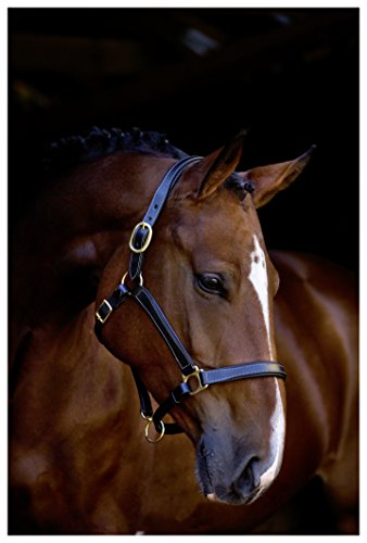 Kerbl Halfter Pferdehalfter Leder, London Schwarz, 3, 323571