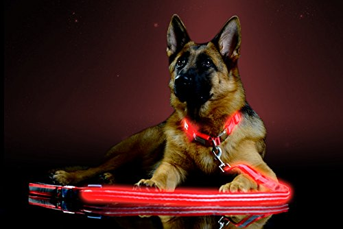 Pet Industries Premium LED Reflective Dog Leash, USB Rechargeable, Available in 6 Colors (Crimson Red)