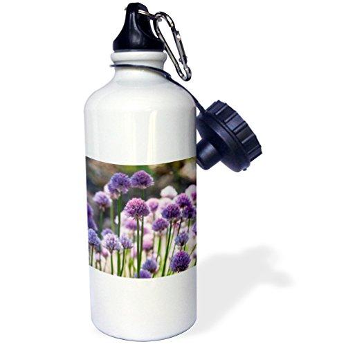 3dRose Uta Naumann Photography Flowers - Pink Leek Flowers in Spring - 21 oz Sports Water Bottle (wb_253420_1)