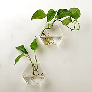 AWEVILIA Wall Hanging Plants Planter Terrariums Creative Fashion Glass  Hexagon Shape Vase Home Decor Wall Plants Set Of Two