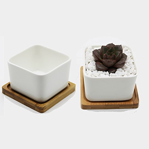 Purzest Modern White Ceramic Succulent Planter Pot with Bamboo Tray, Square,3.5 inch,Set of 2 - Succulent Planter Tray