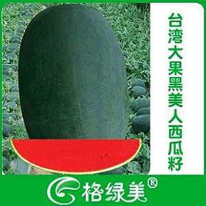 La belleza grande negro de pulpa de semilla de sandía semillas de hortalizas 10pcs
