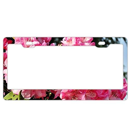 - Zogpemsy Azaleas Flowering Leaf License Plate Frame Slim Alumina 2 Holes