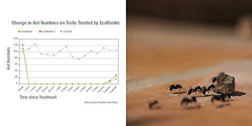 EcoRaider Ant Killer & Crawling Insect Killer (Citrus Scent) 16 OZ, Natural & Non-Toxic by EcoRaider (Image #6)