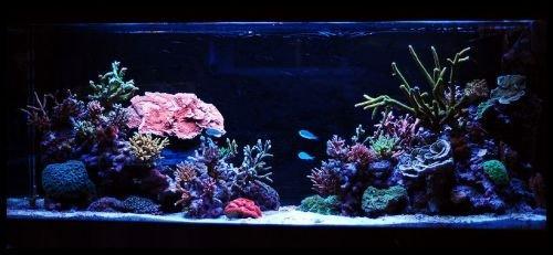 amazon com ledwholesalers white and blue high power led aquarium