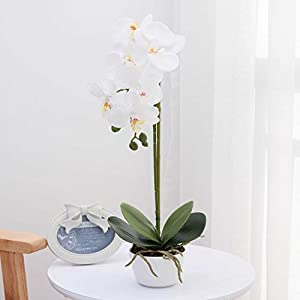 LIVILAN Silk Phalaenopsis Flower Arrangement 24