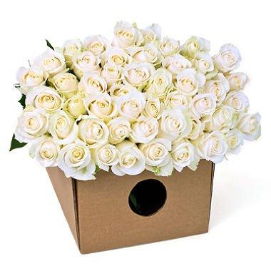 Fresh-White-Roses-50-cm-long-20-50100200