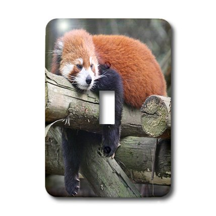 Albom Design Animals - Adorable Red Panda, Sichuan Province, China - Light Switch Covers - single toggle switch (lsp_100288_1) by 3dRose (Image #2)