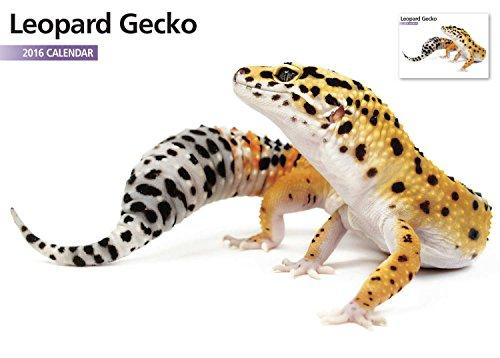 Leopard Geckos 12 Month 2016 A4 Calendar