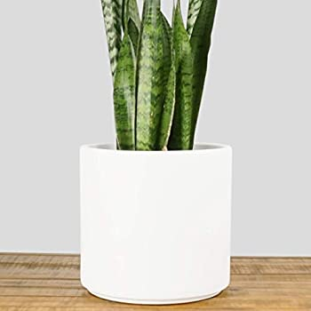 Indoor Flower Pot | Large Modern Planter, Terracotta Ceramic Plant Pot    Plant Container Great For Plant Stands (10.5 Inch, White)