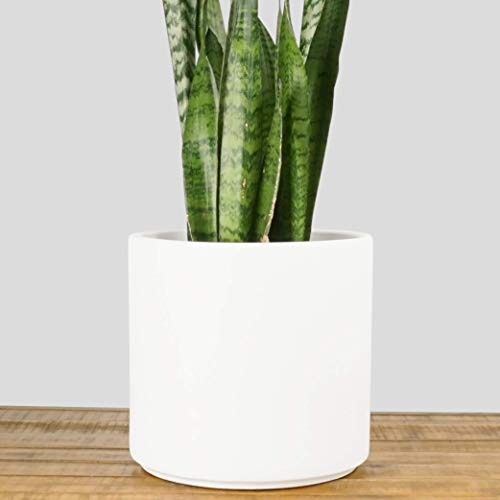 Indoor Flower Pot | Large Modern Planter, Terracotta Ceramic Plant Pot - Plant Container Great for Plant Stands (10.5 inch, White) by Peach & Pebble (Image #7)
