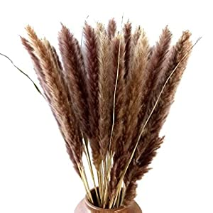 "30 Pcs Natural Dried Small Pampas Grass, Phragmites Communis, Dog Tail Grass, Dry Bouquet, Wedding Flower Bunch, 23"" -24"" Tall Home Décor 2"