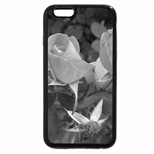 iPhone 6S Plus Case, iPhone 6 Plus Case (Black & White) - wild Roses on a picnic day at the park 03