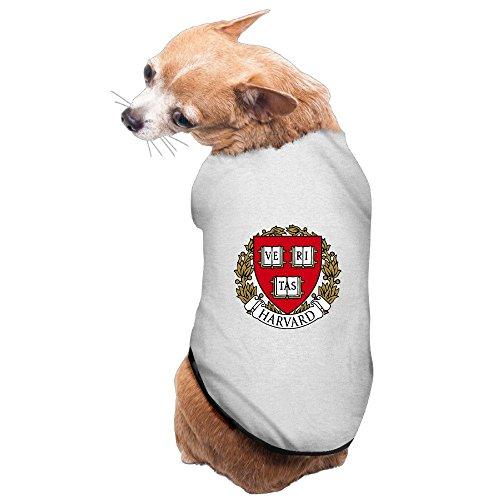 Boston Terrier Breed Standard - 4