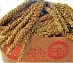 Worlds Freshest Spray Millet 5 Pound Box Nemeth Farms the Original, My Pet Supplies