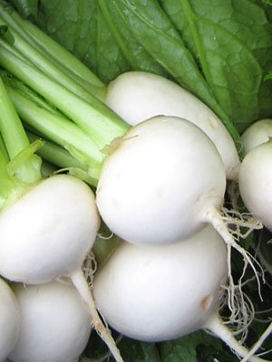 White Egg Turnip Seeds 25 LB ~5,450,000 seeds