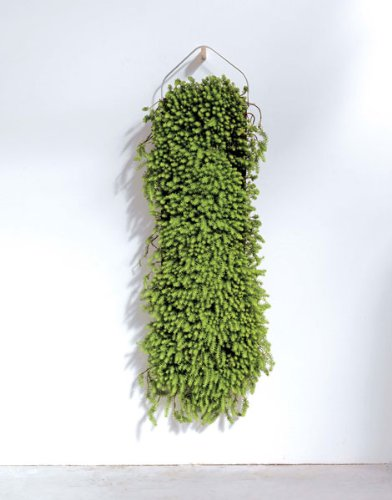 Végétal design: Patrick Nadeau Design - Alternatives: Amazon.es ...