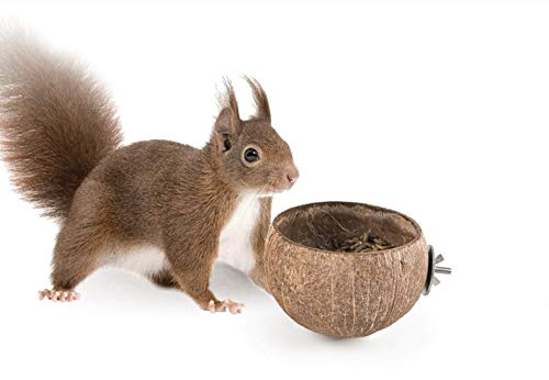 Best Squirrels