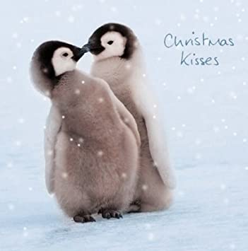 Wwf Weihnachtskarten.Weihnachtskarten F Uuml R Hilfsorganisationen Pinguin Motiv